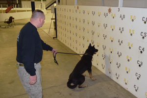 k-9 training to detect scents and alert on a scent wall